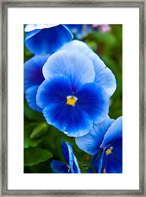 Beautiful Blues Framed Print by Az Jackson