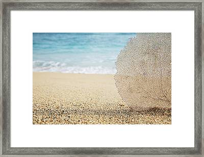 Beautiful Coral Element 1 Framed Print by Brandon Tabiolo - Printscapes