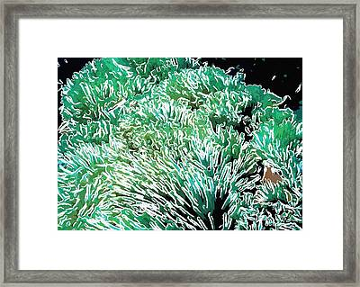 Beautiful Coral Reef 2 Framed Print by Lanjee Chee