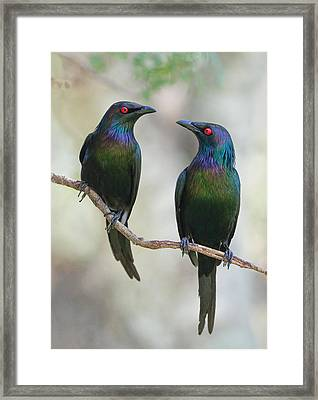 Beautiful Couple Framed Print by Jacqueline Hammer