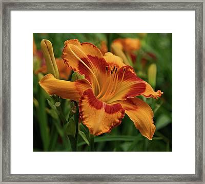 Beautiful Daylily Framed Print by Sandy Keeton