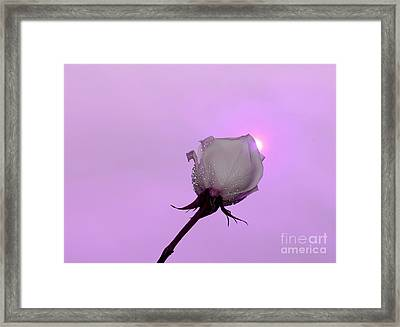 Beautiful Destiny Framed Print by Krissy Katsimbras