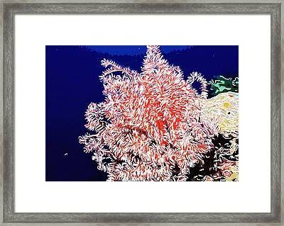 Beautiful Fan Coral Framed Print by Lanjee Chee