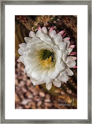 Beautiful Giant Framed Print by Robert Bales