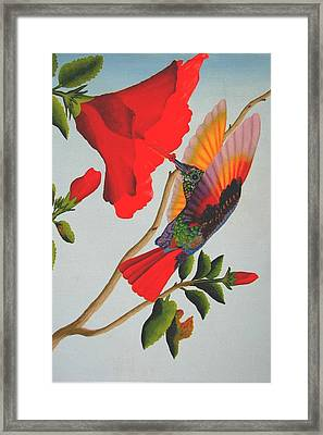 Beautiful Hummingbird Framed Print by Brian Leverton
