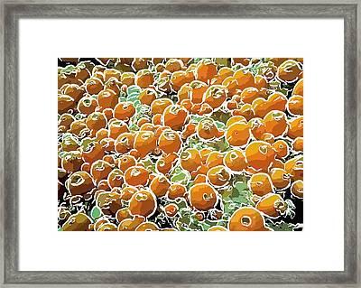 Beautiful Marine Plants 3 Framed Print by Lanjee Chee