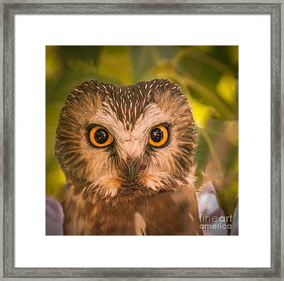 Beautiful Owl Eyes Framed Print by Robert Bales