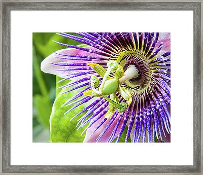 Beautiful Passion Framed Print by Dawn Currie