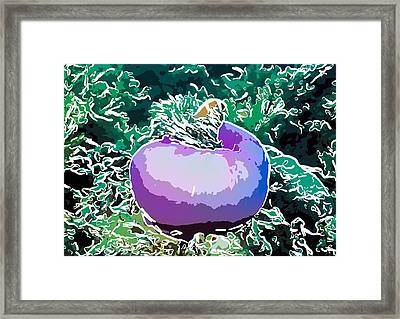 Beautiful Pink Clowfish Framed Print by Lanjee Chee