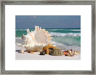 Beautiful Sea Shell On Sand Framed Print by Boon Mee