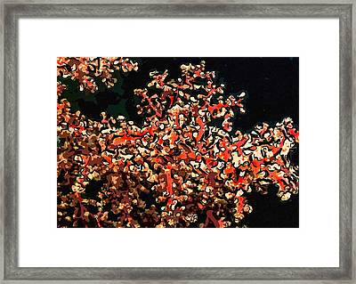 Beautiful Soft Coral 3 Framed Print by Lanjee Chee