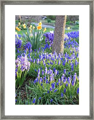 Beautiful Spring Day Framed Print by Carol Groenen