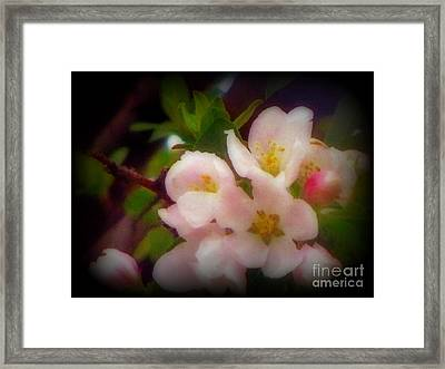 Beautiful Springtime Blooms Framed Print by Kay Novy