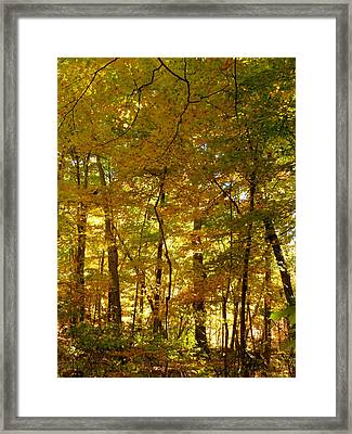 Beautiful Trees In The Forest 14 Framed Print by Lanjee Chee