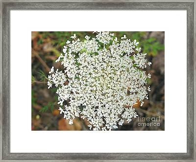Beautiful Weed Framed Print by Colleen Kammerer