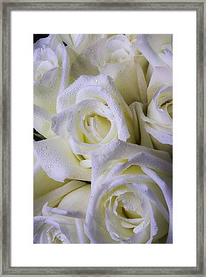 Beautiful White Roses Framed Print by Garry Gay