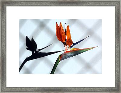 Beauty And The Shadow Framed Print by Terence Davis