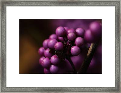 Beauty Berries  Framed Print by Connie Handscomb