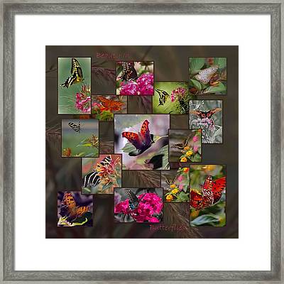 Beauty In Butterflies Framed Print by DigiArt Diaries by Vicky B Fuller