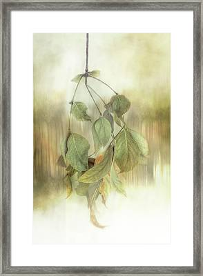 Beauty In Decay Framed Print by Terry Davis