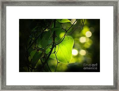 Beauty In Green Framed Print by Kim Henderson