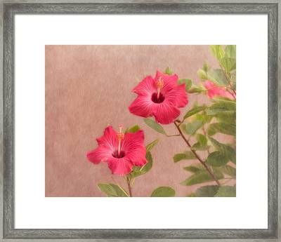 Beauty In The Garden Framed Print by Kim Hojnacki