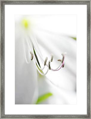 Beauty In Things Exist In The Mind Which Contemplates Them. Framed Print by Mark Denham