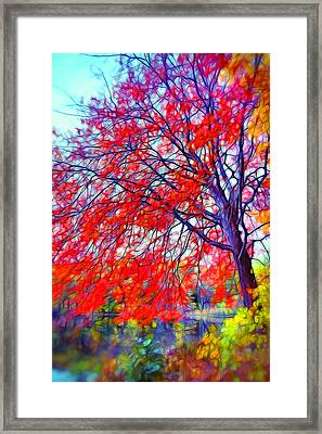 Beauty Of Autumn Framed Print by Lilia D
