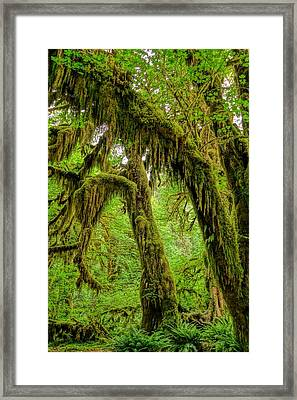 Beauty Of Hoh Rainforest Framed Print by Dan Sproul