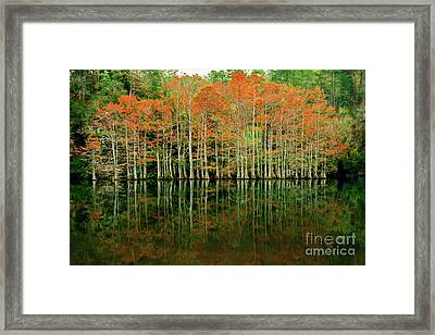Beaver's Bend Cypress All In A Row Framed Print by Tamyra Ayles