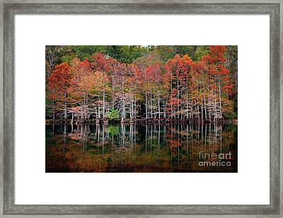 Beaver's Bend Cypress Soldiers Framed Print by Tamyra Ayles