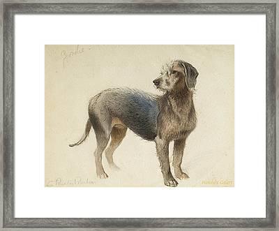 Bedlington Terrier Framed Print by Charles Burton