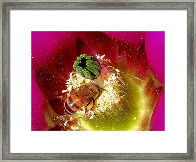 Bee At Work Framed Print by Feva  Fotos