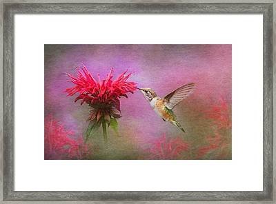 Bee Balm And Hummingbird Framed Print by Angie Vogel