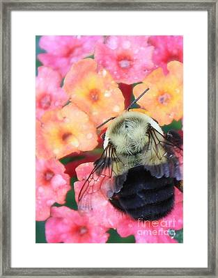 Bee Card Framed Print by Carol Groenen