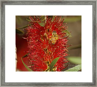 Bee Have Framed Print by Merrin Jeff