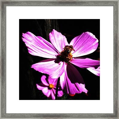 Bee Mine Framed Print by Joseph Frank Baraba