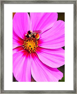 Bee On Pink Framed Print by Bill Caldwell -        ABeautifulSky Photography