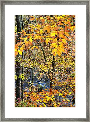 Beech Leaves Birch River Framed Print by Thomas R Fletcher
