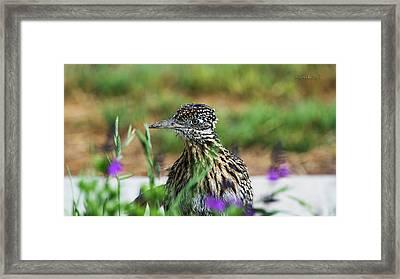 Beepbeep Framed Print by Karen Slagle