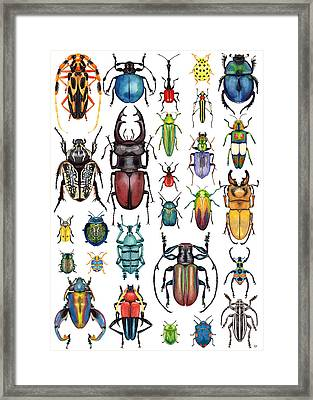 Beetle Collection Framed Print by Kelly Jade King