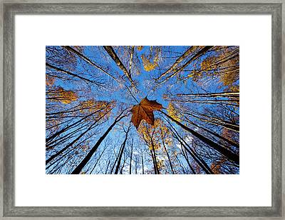 Before The First Snow Framed Print by Mircea Costina Photography