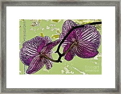 Behind The Orchids Framed Print by Gwyn Newcombe
