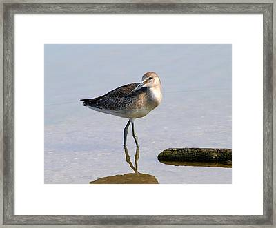 Being Coy Framed Print by Kala King