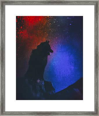 Belgian Sheepdog Art 2 Framed Print by Wolf Shadow  Photography