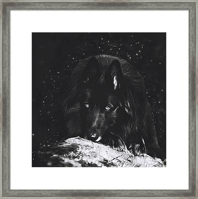 Belgian Sheepdog Art 5 Framed Print by Wolf Shadow  Photography