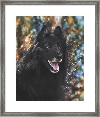 Belgian Sheepdog Art 9 Framed Print by Wolf Shadow  Photography