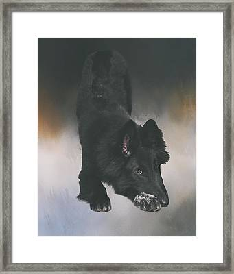 Belgian Sheepdog Puppy Art Framed Print by Wolf Shadow  Photography