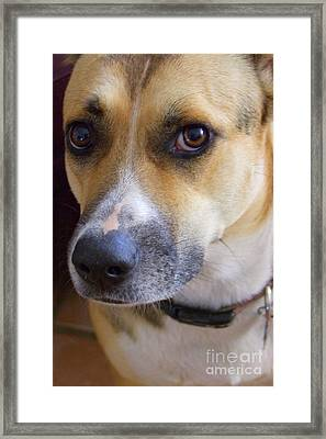 Bella Framed Print by Mary Deal