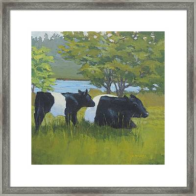 Belted Galloway And Calf Framed Print by Bill Tomsa
